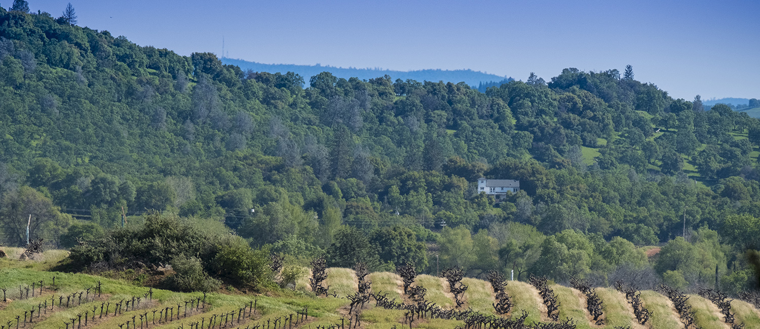Vineyards of Amador County